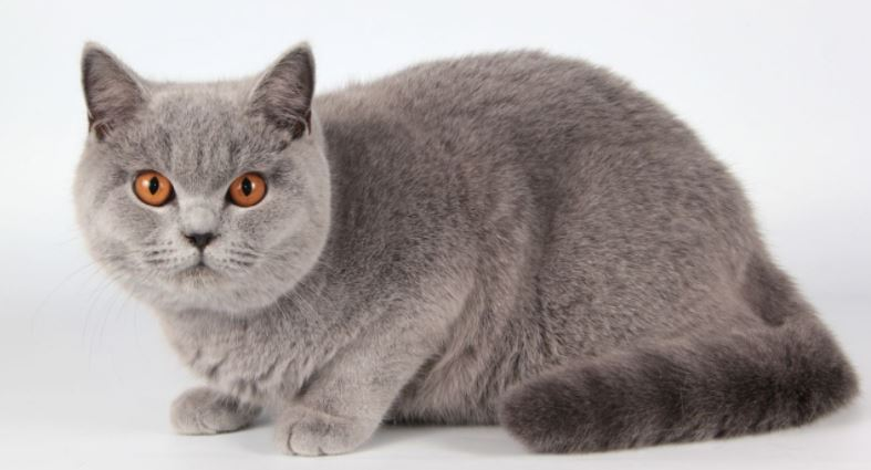 Most Kids Friendly Cat Breeds